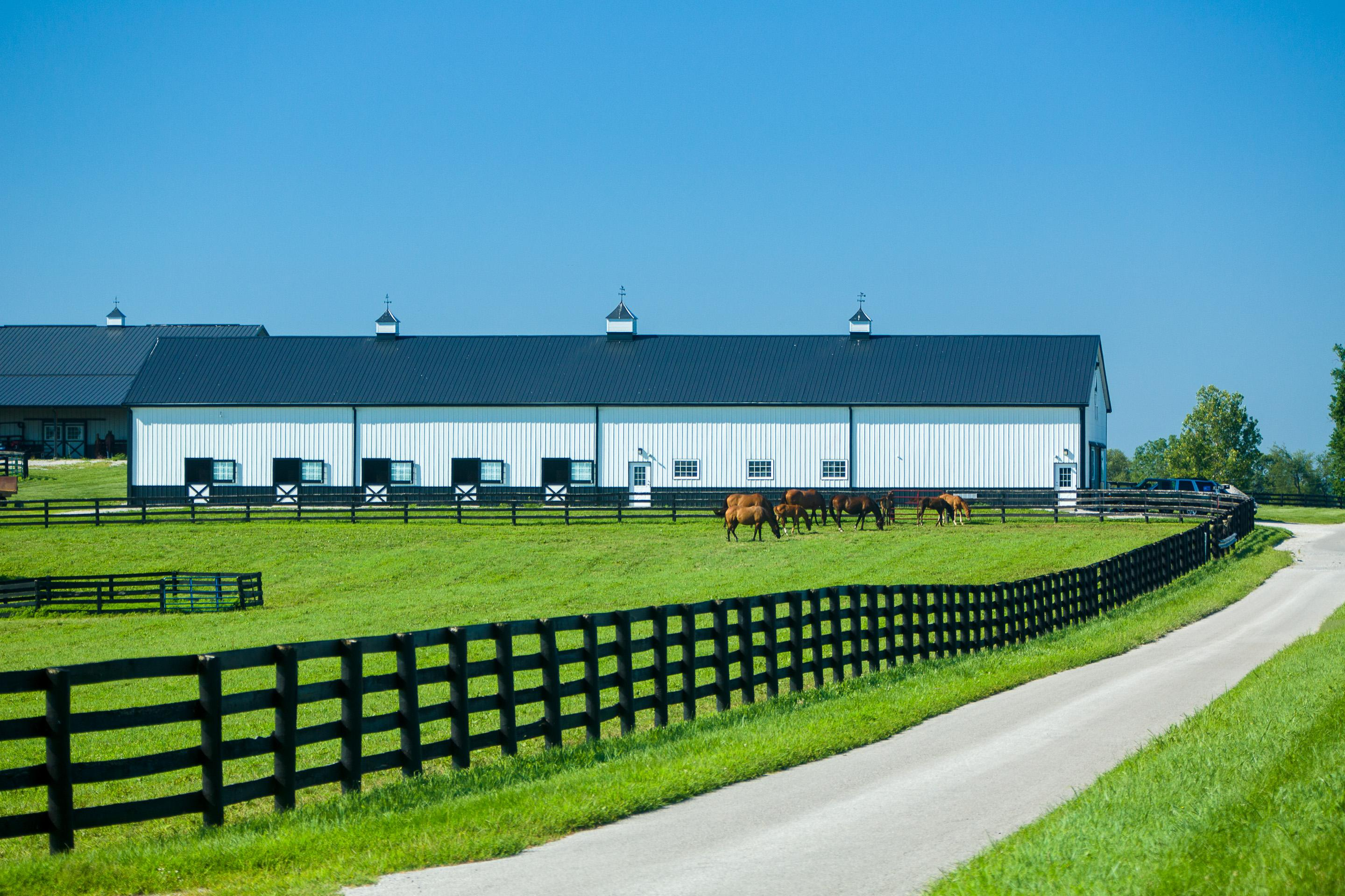 Maine Chance Farm barns