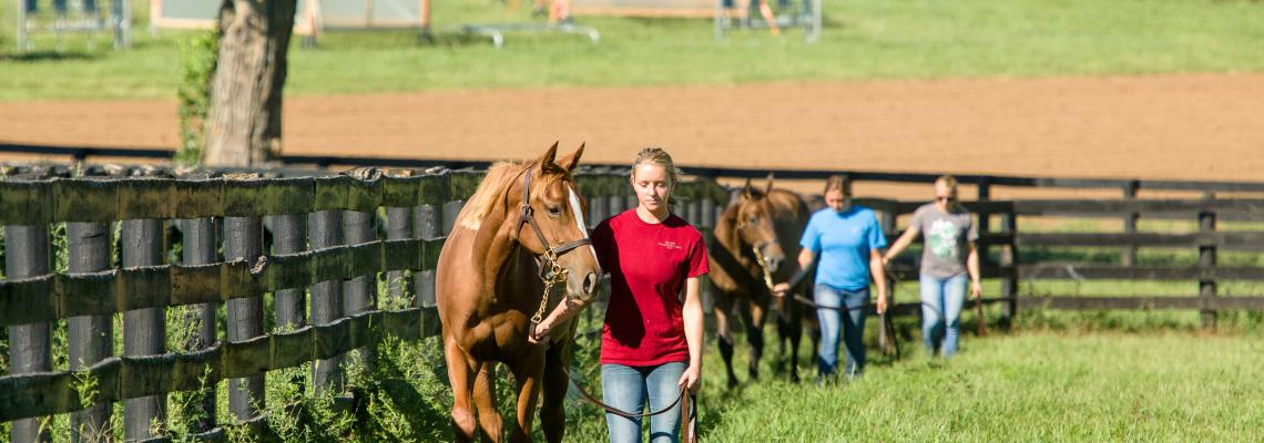 Students leading horses on UK's Maine Chance Farm