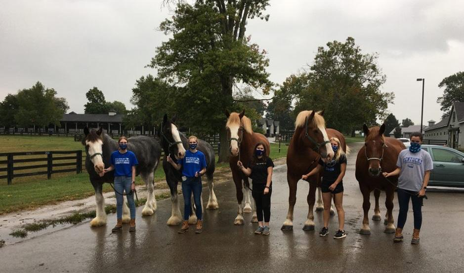 UK Equine Week of Service