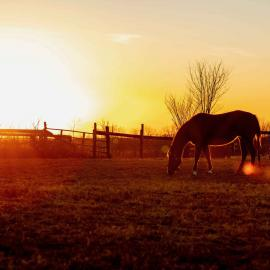 Youth Division Farm Landscape winning photo by Grace Grider