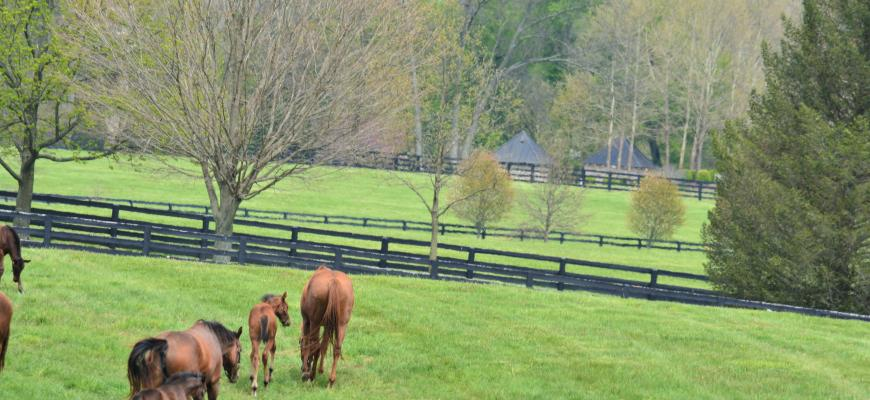 2020 Spring KY Horse Photo
