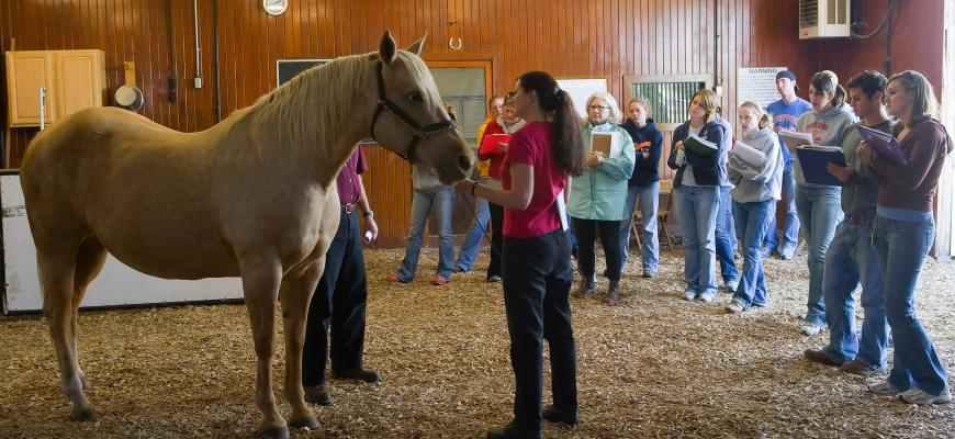 equine_class_dr._mary_rossano.jpg