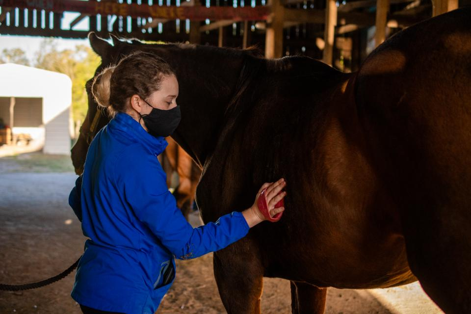 Equine student helping out at Our Mims Retirement Haven during the Equine Week of Service