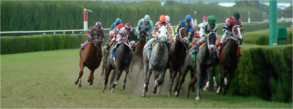 horse_turf_racing_photo.png